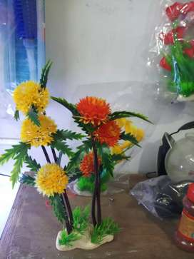 Plant  all  type  al  color