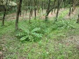 30 cent rubber plot..near Anappad,Malayinkeezhu
