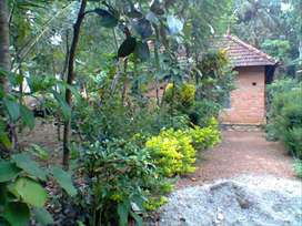 11 cent with old house for sale 1. lac per cent (Anchel , Alenchery)