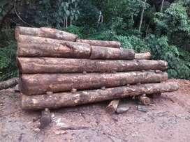 Wood (thekke)