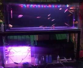 Aquarium full set + rak besi