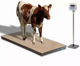weighing scales for cattle