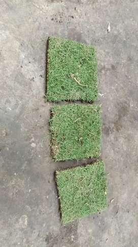 Jual rumput jepang sidoarjo + jasa pasangnya