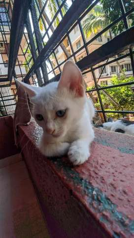 Cats for adoption