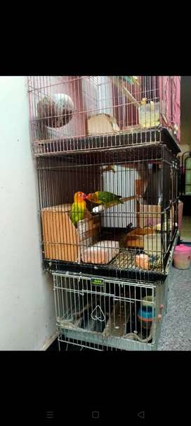 Lovebird sepasang josan dan pasjo