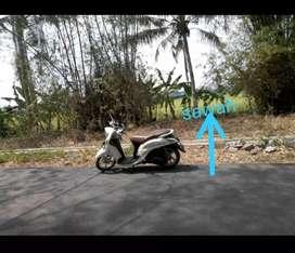 Sawah 1000 m Pinggir Jalan Desa Di Kasemen Dekat Terminal Pakupatan