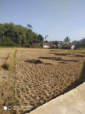 Sawah cocok untuk pertanian