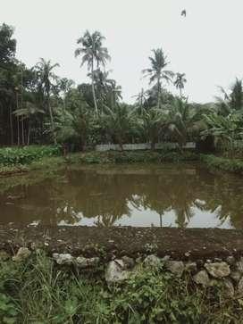 Fish pond for sale correct location pathanamthitta konni kollampadi
