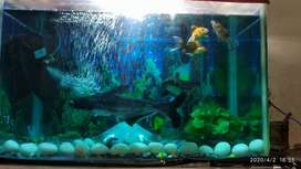 """Aquarium size 24""""×15""""×12"""""""