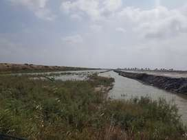 72 Acres Agricultural land Survey for sale in Gujjo Thatta. Fish Farm