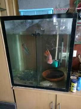 Aquarium made of glass
