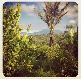 Disewakan Tanah Cantik At Abuan Bangli - Bali