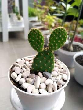 Aneka kaktus dan secculen cantik Jogja