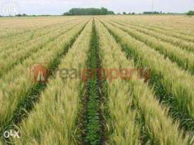 Zarie Zameen for sale 40 acer