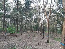 35 acre well maintained  agricultural property  at karkala