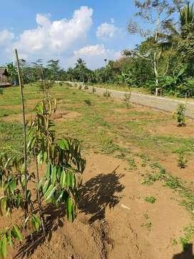 Dijual kavling murah ada pohon durian di Tasikmalaya