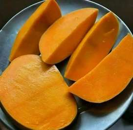 Organic Alphonso Mangoes, Home Delivery Available at all Maharashtra
