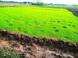 Farmland in ongur, Acharapakkam