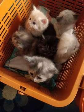 Kittens cute n unique colours