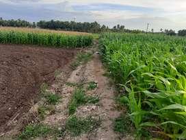 Agricultural land/Agriculture land/Agriland/Coconut farm/Farm land