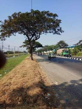 Tanah SHM Untuk Gudang Pabrik di Onggorawe Sayung Demak