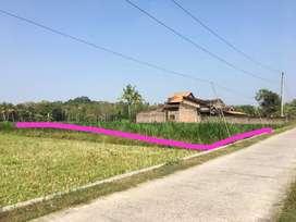 Dijual tanah murah di sentolo Kulon Progo Yogya dekat NYIA asri murah