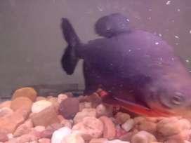 Best quality Fish