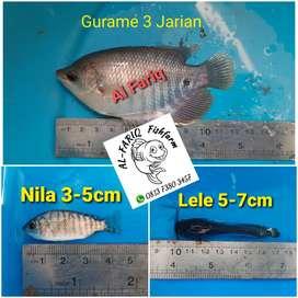 Jual Benih Ikan Gurame, Lele, Nila dll