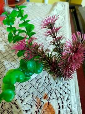 Aquarium+plants+pebbles+filter