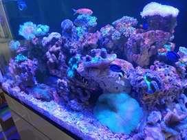 Jasa Build Aquarium Laut