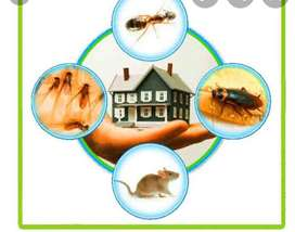 Best ever treatment of termite