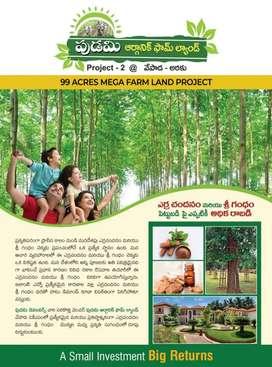 Affordable price @ 1500 per square.yard  Vepada Araku Road