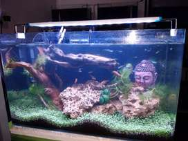 Planted tank for sale start from 8000