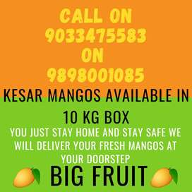 Kesar mangos available with free home delivery