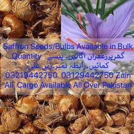 Saffron Seeds/Bulbs Available زعفران اگائیں۔