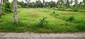 Cocok Buat Villa Pakem Kaliurang Luas 7500 Meter