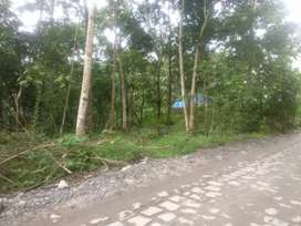 1 acre 42 cent land.fully rubber plantation