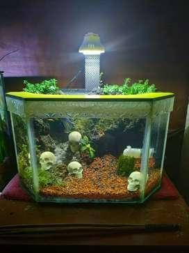aquarium aquascape 30cm segienam
