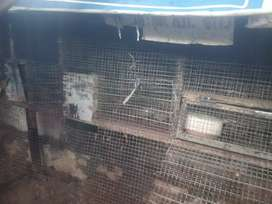 Cage for sale, suitable for pets