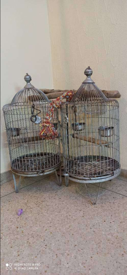 Cage for Birds 0