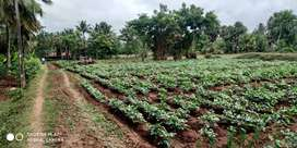 1 acres farm land sale velantavalam, kozhinjampara, palakkad dt