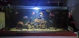 Aquarium 150×60×60