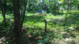 Perumballoor, 8 cent plot 48000 per cent  bike road only
