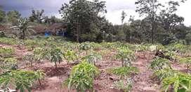 Lahan perkebunan