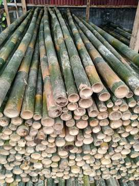 Bambu steger termurah 7.000