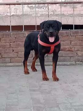good qualty dog only meeting 20000 conact only dogs lover