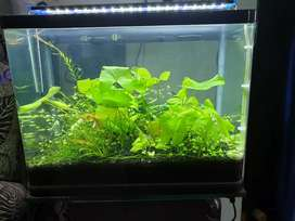 Curved glass aquarium, fully automatic with Co2 Equipped.