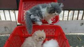 Cleaning Staff for Pet Shop