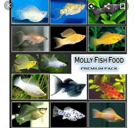 Mauli fish and all breeding fishes