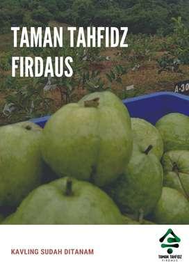 KAVLING TANAH TAMAN TAHFIDZ FIRDAUS BONUS POHON JAMBU DURIAN